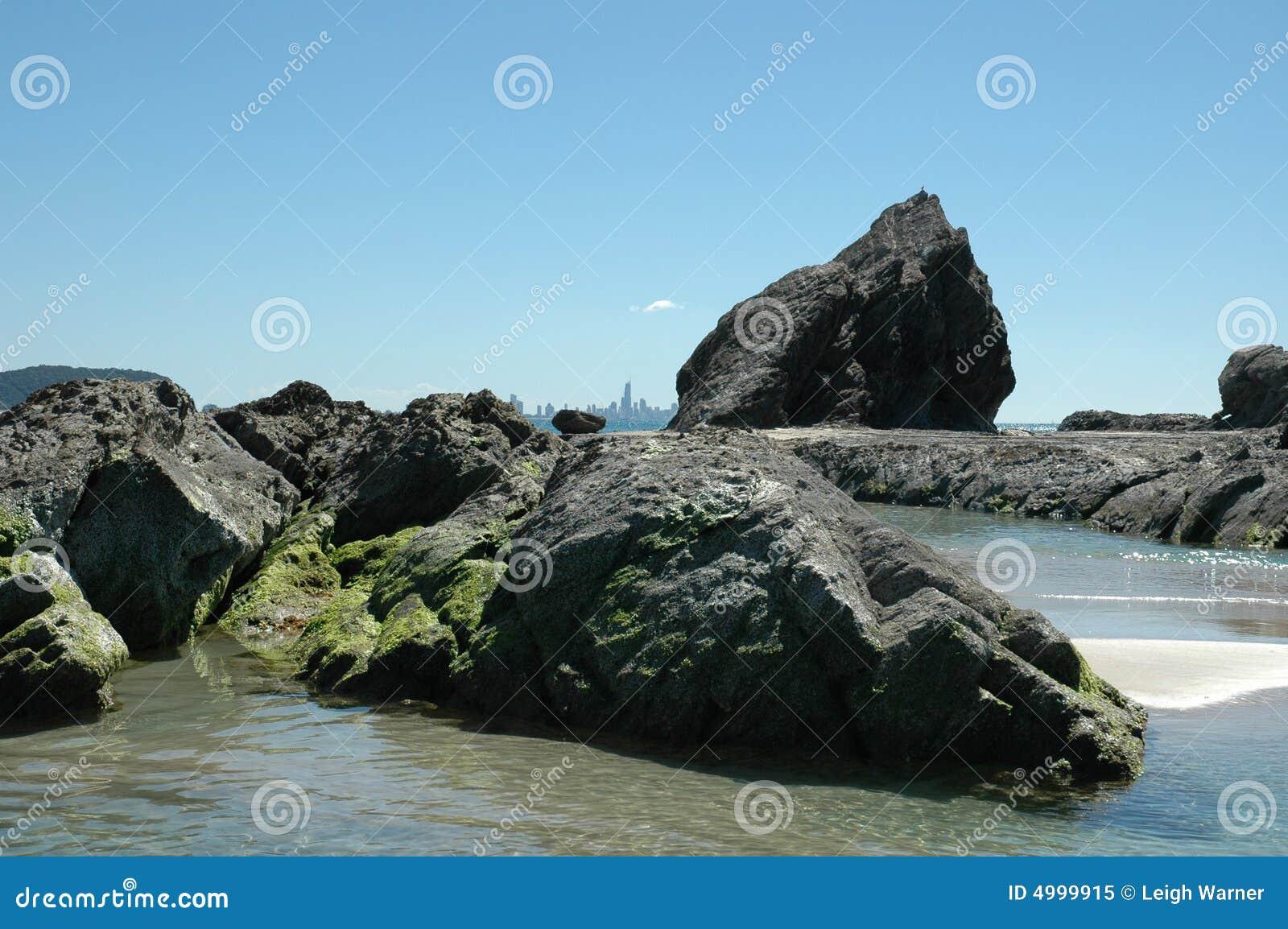 Rock för kustelefantguld