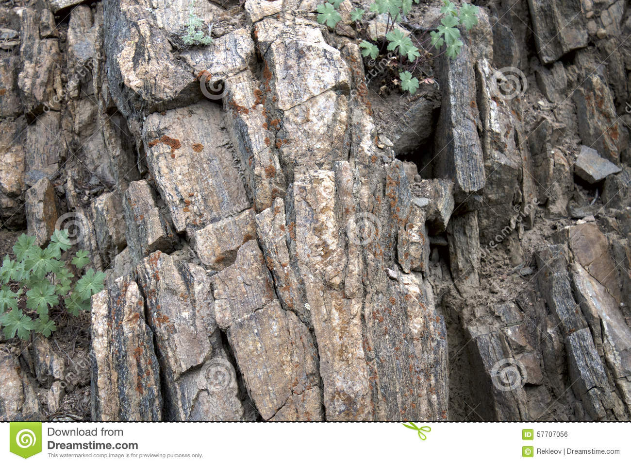 Rock Face With Moss Stock Photo Image 57707056