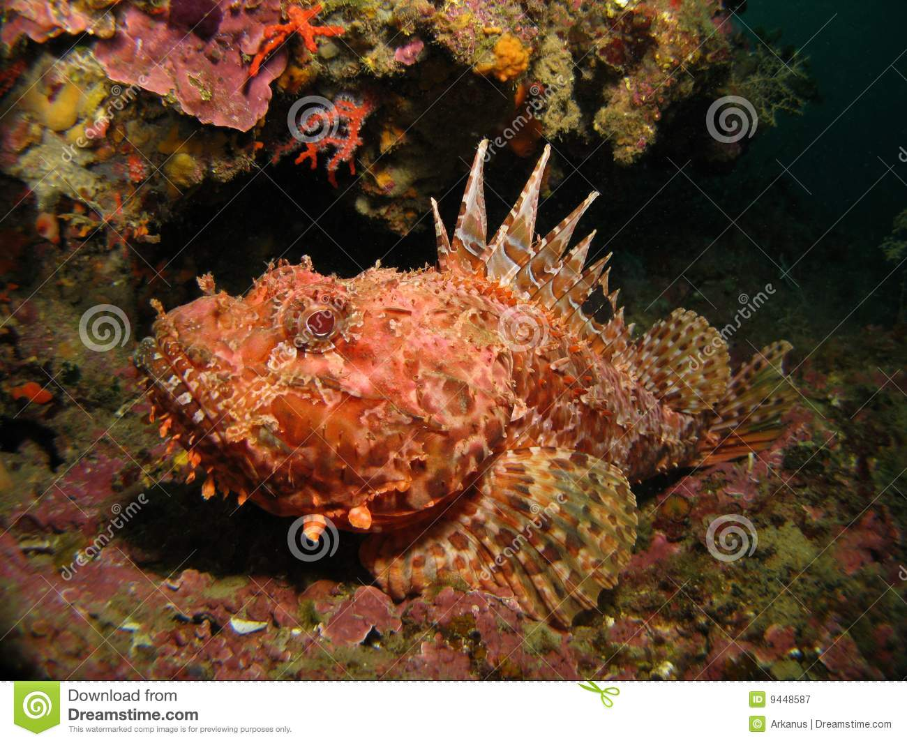 Rock fish royalty free stock photography image 9448587 for Step 2 rocking fish