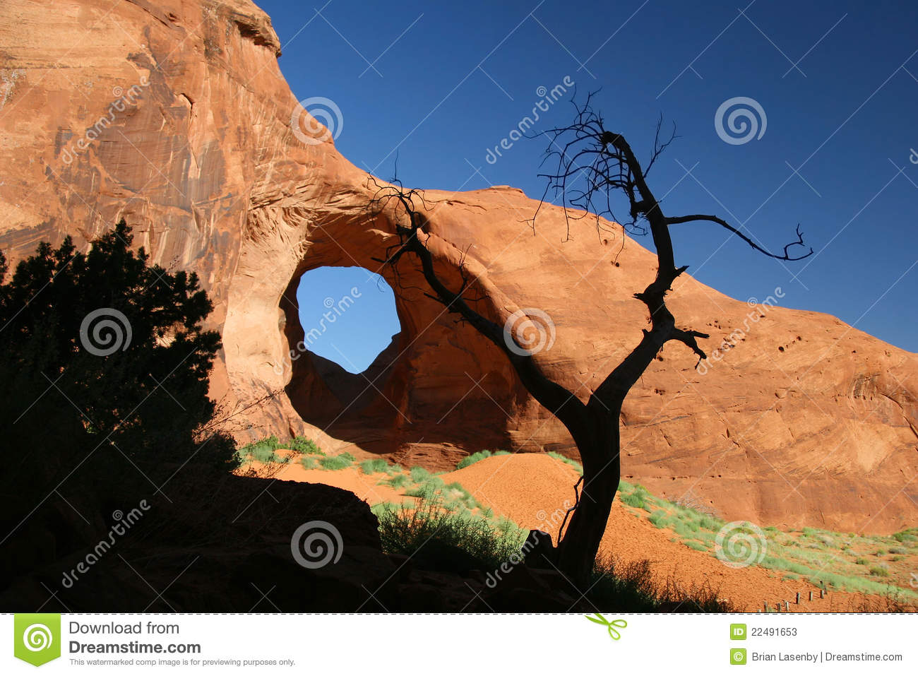 Rock Formation and Juniper Tree - Monument Valley