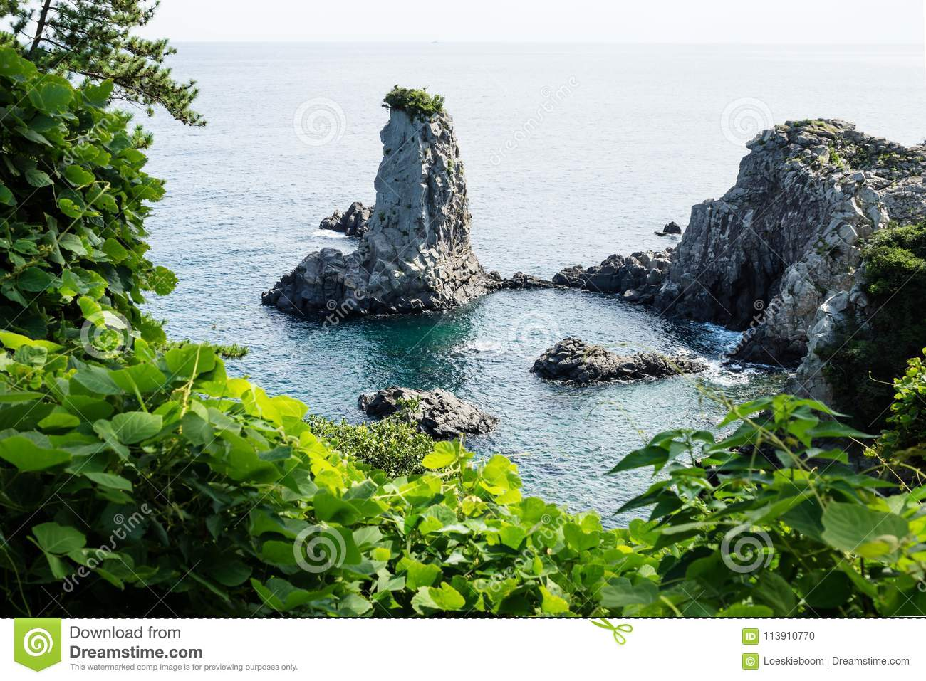 Rock formation Oedolgae surrounded by leaves close in the ocean at Seogwipo, Jeju Island, Korea