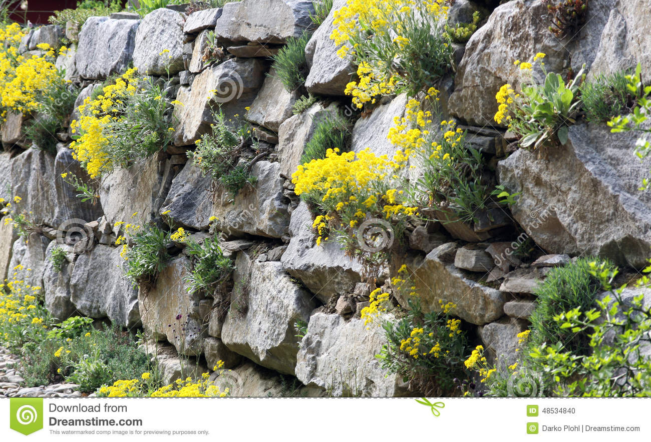 rock garden or a garden wall stock photo - image: 48534840