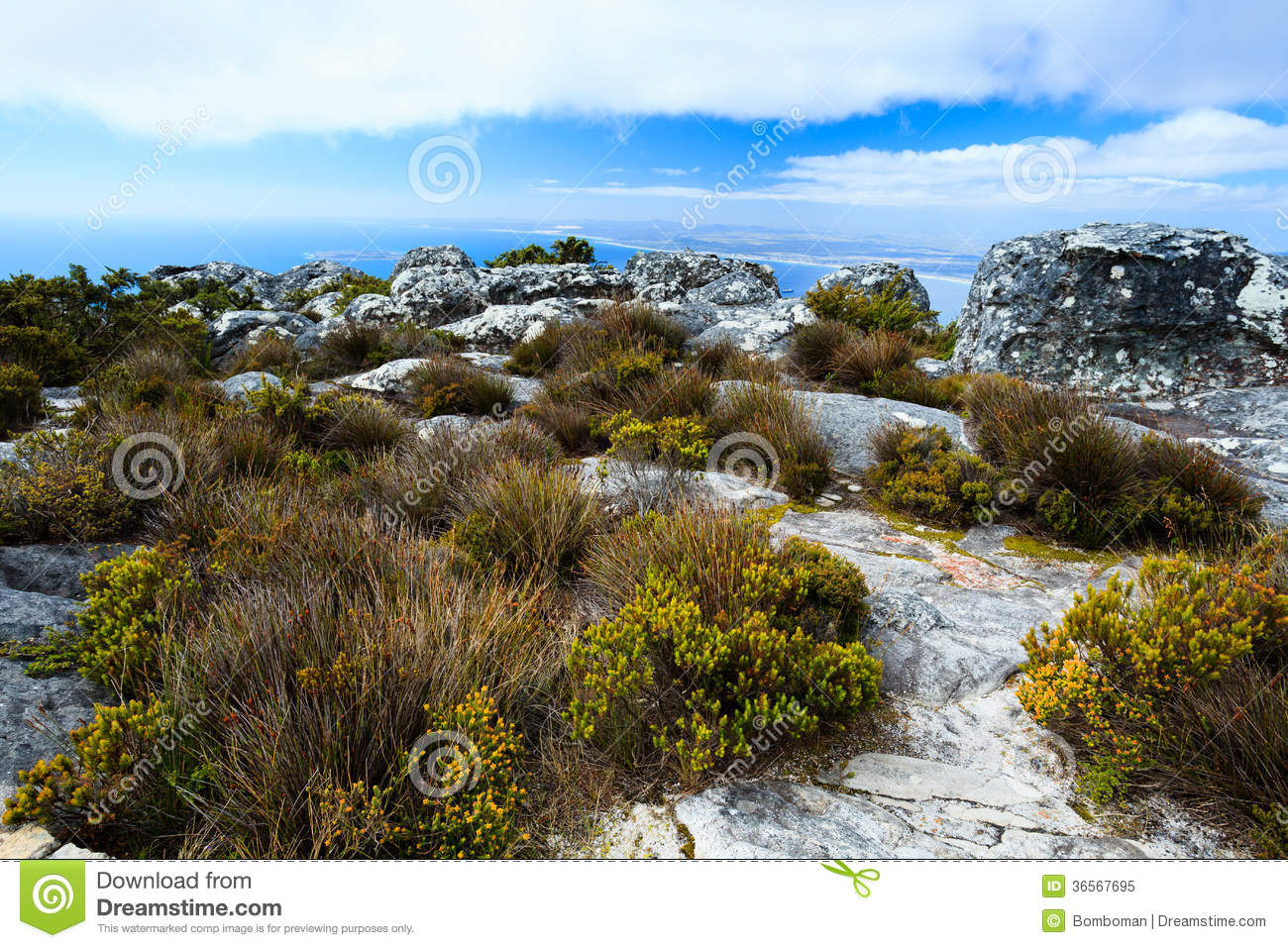 Rock and landscape on top of table mountain south af for Landscaping rocks cape town