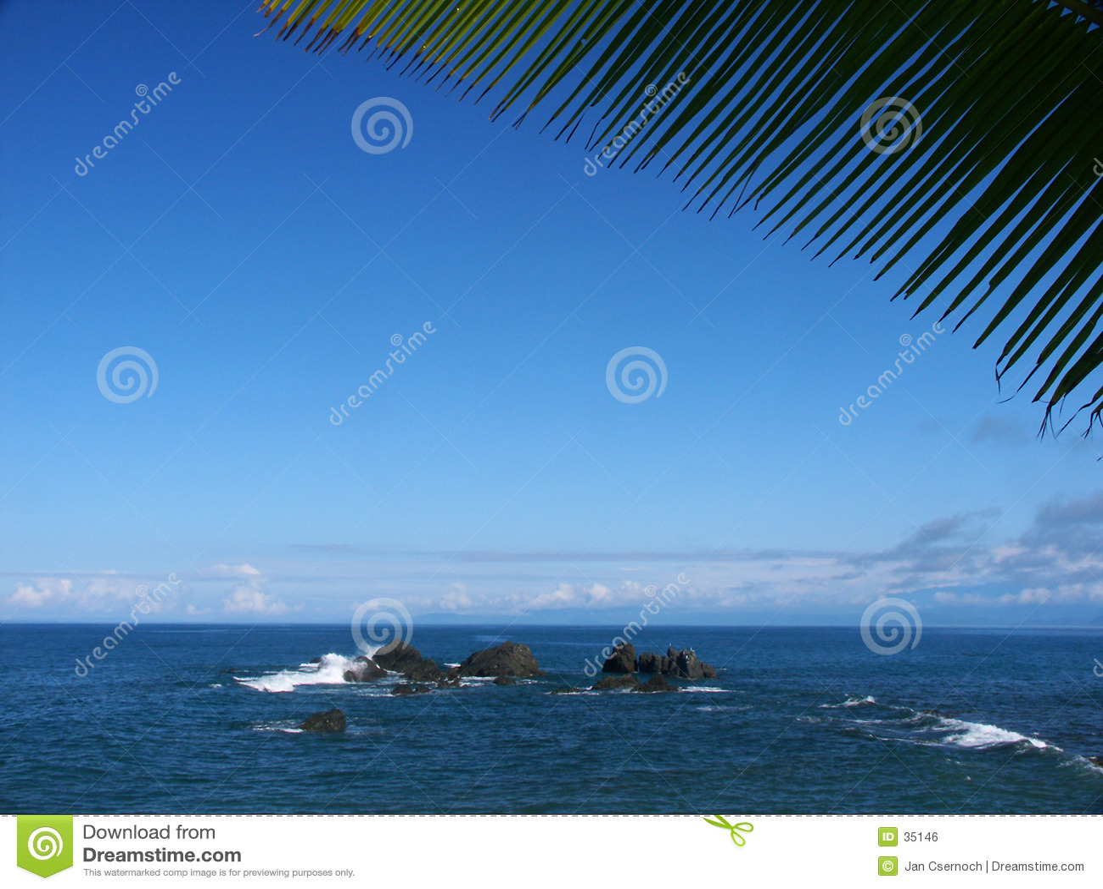 Rock palmtree seaview liści