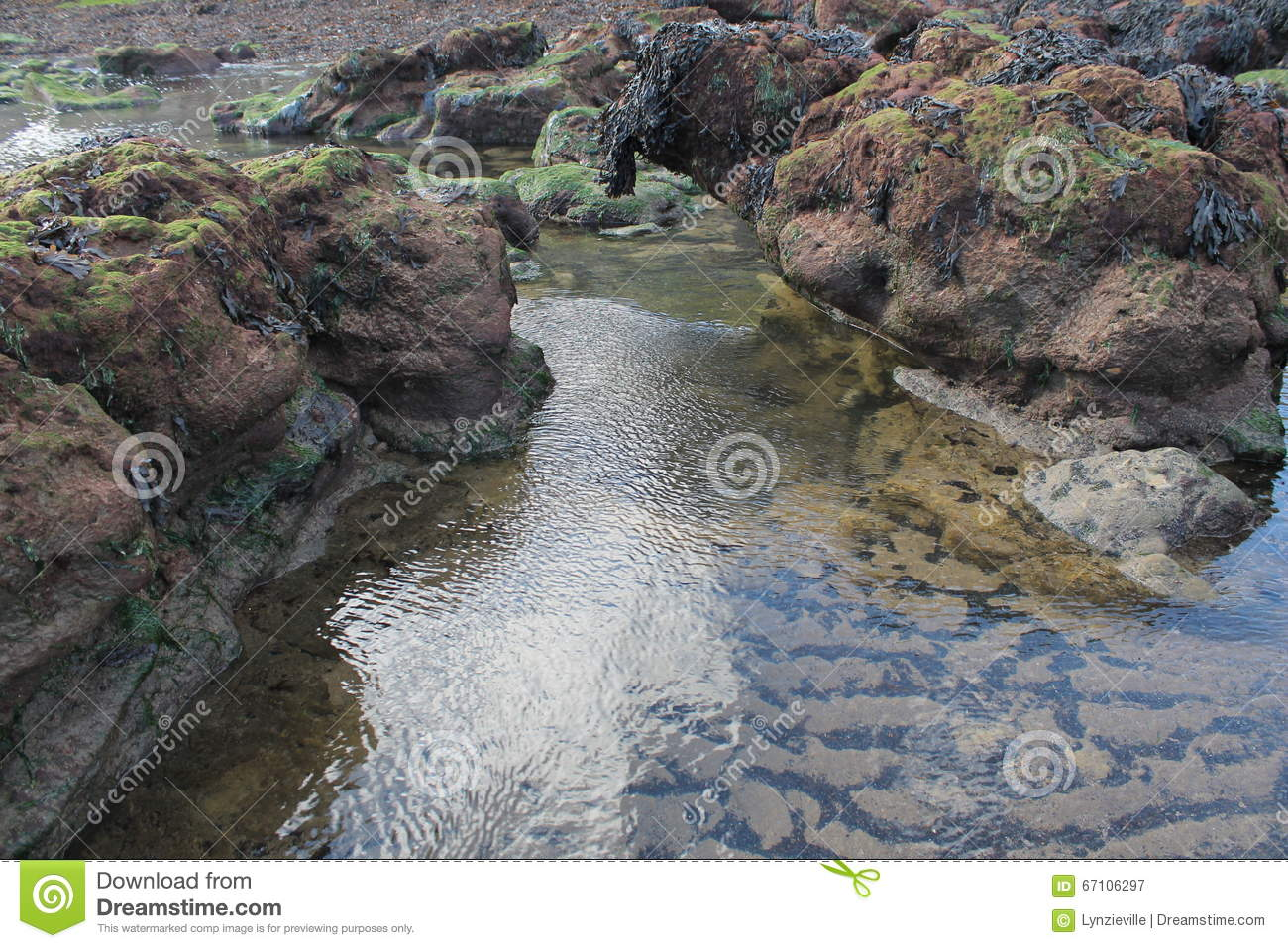 Rock pools with seaweed on beach