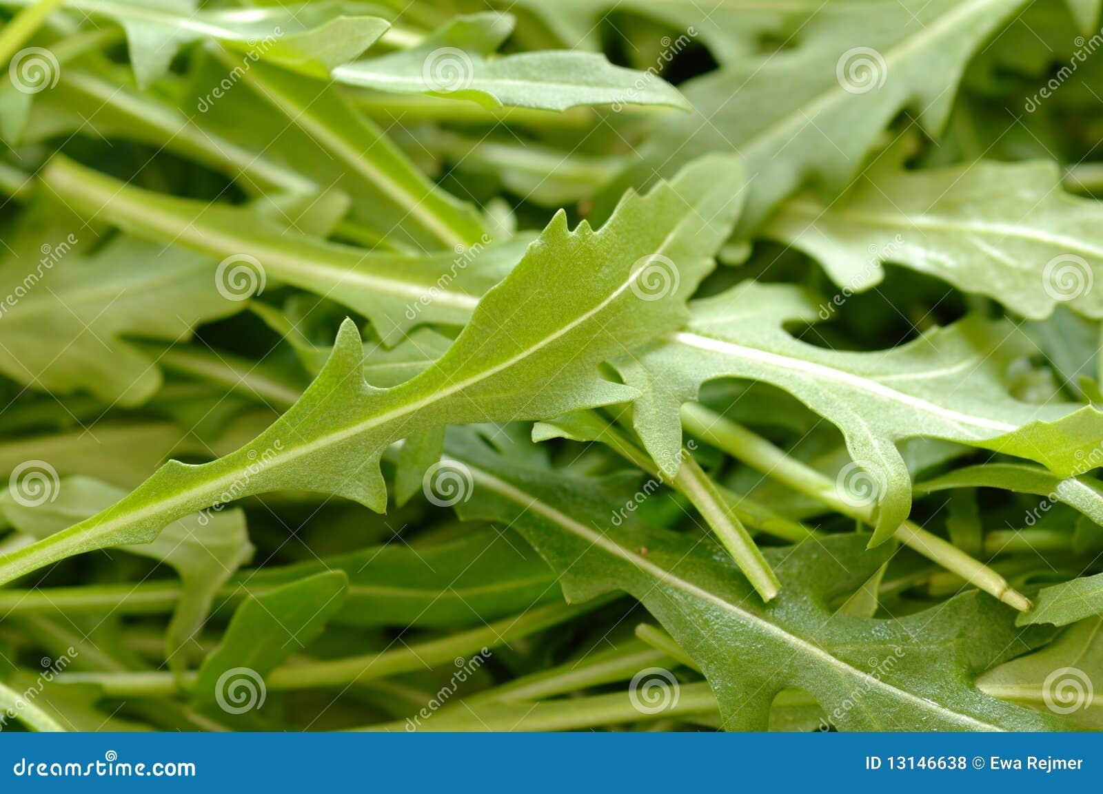 Fresh Green Rocket Salad