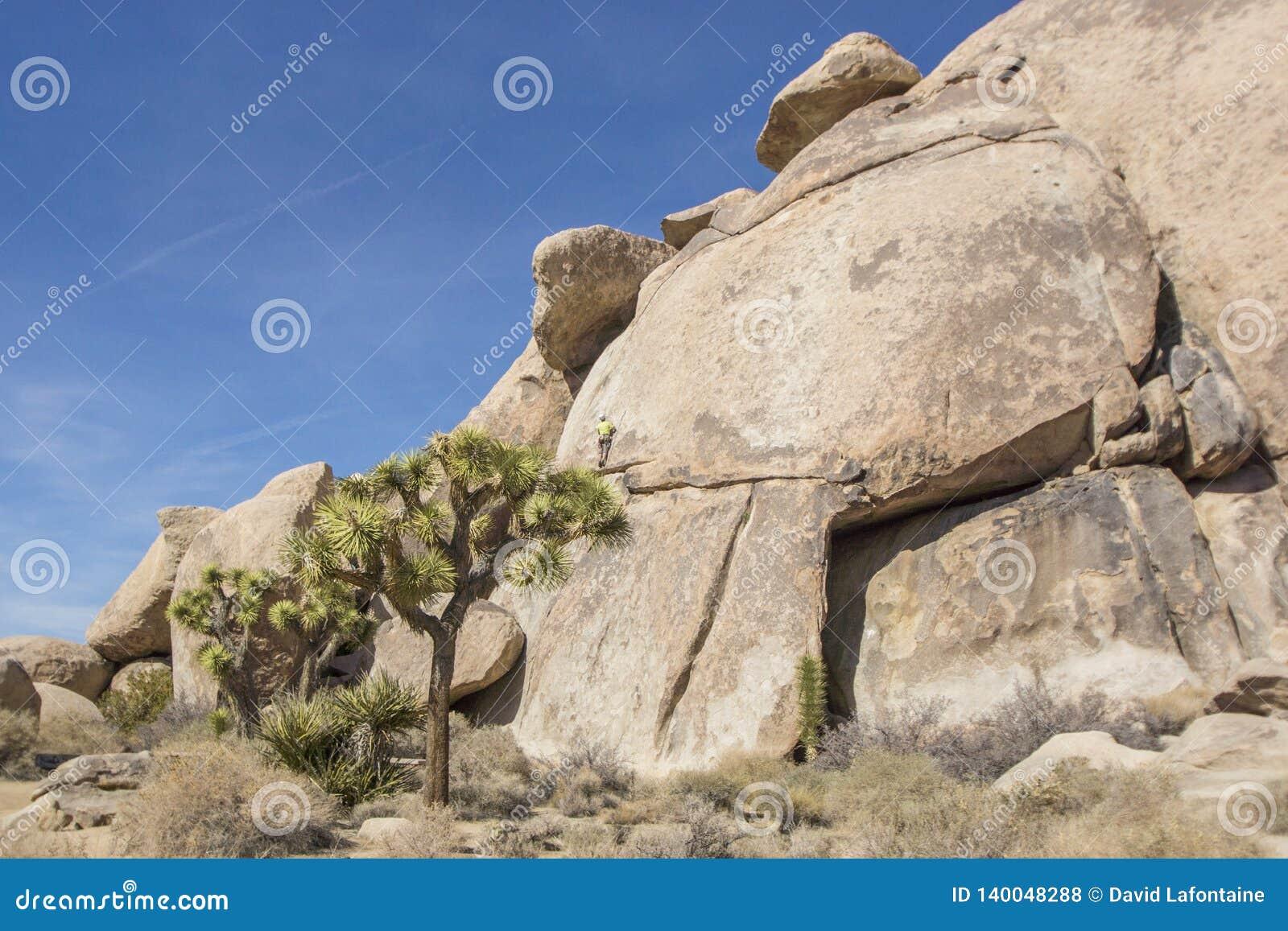 Rockowy arywista przy Joshua drzewa parkiem narodowym