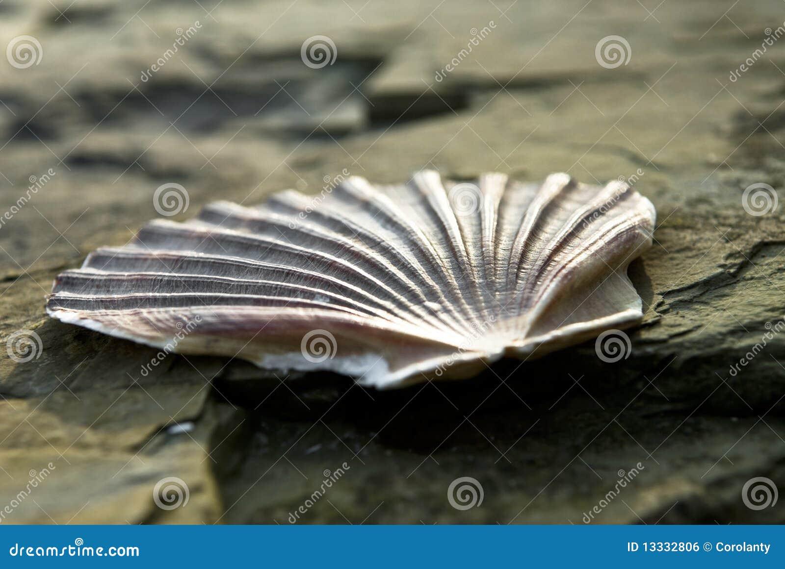 Rockowy seashell