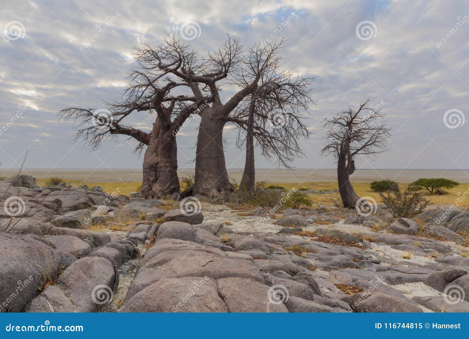 Rocks and baobab trees