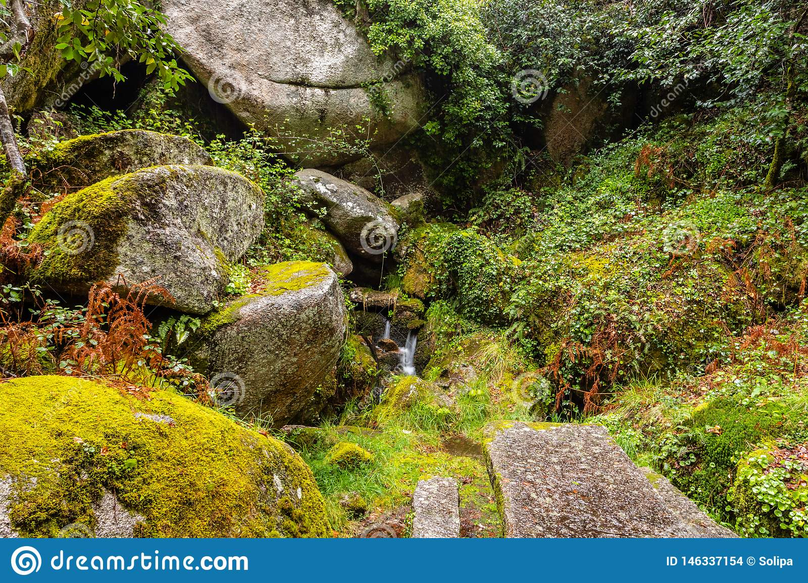 Rocks covered by green moss in the Peneda geres National Park forest, north of Portugal