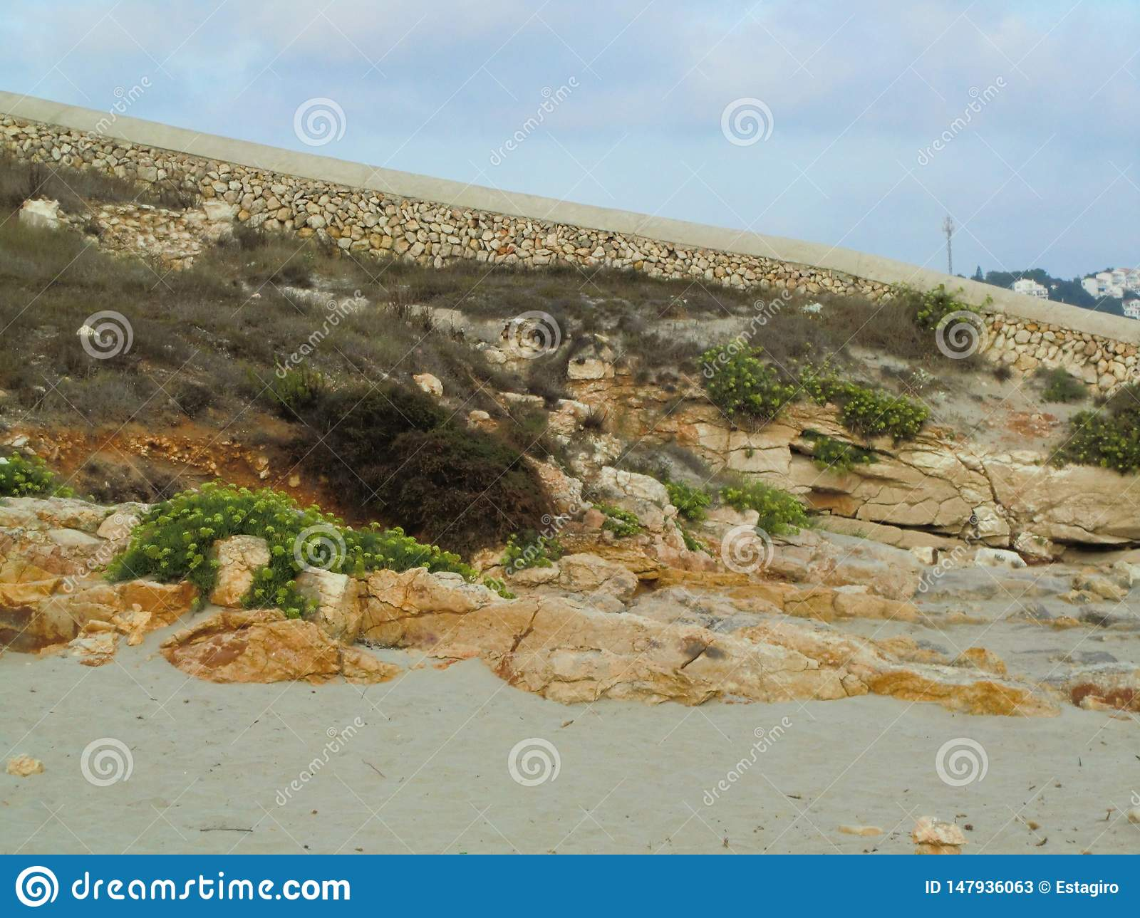 Rocks and green plants on the sand of the beach