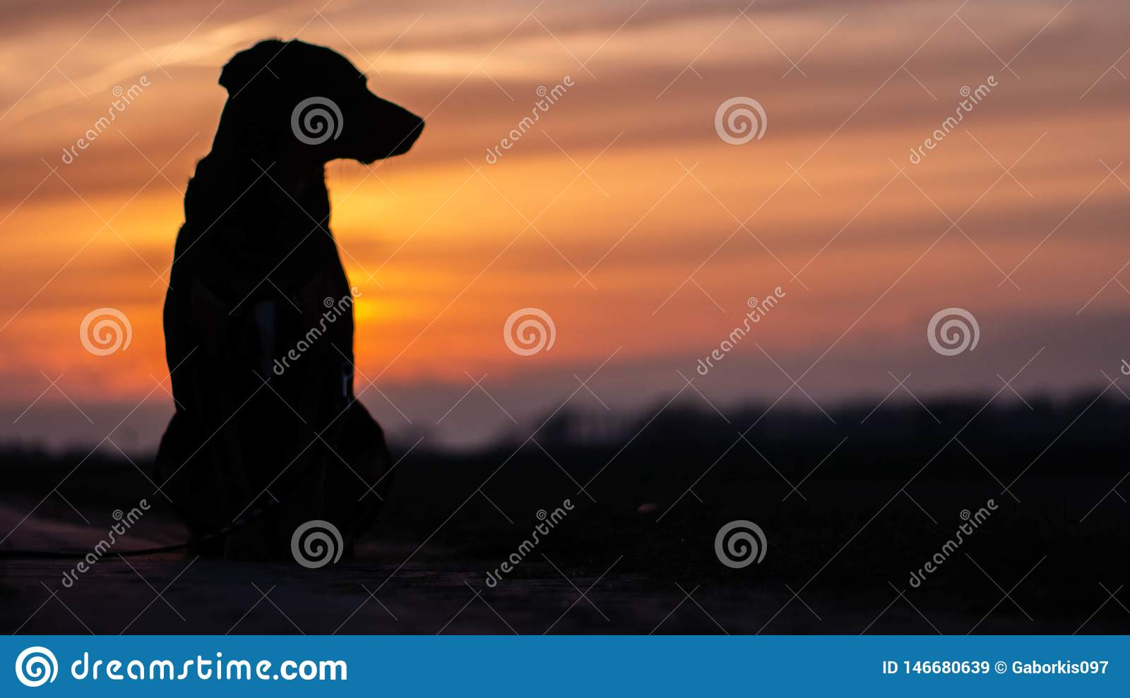 Rocky dog and sunset