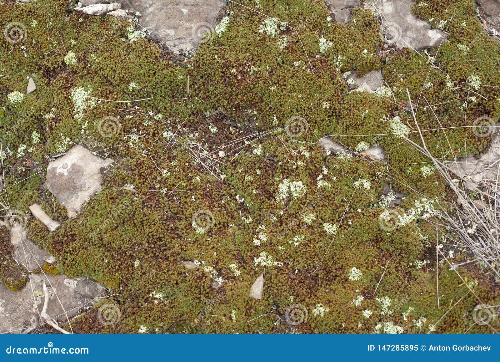 Rocky ground with moss