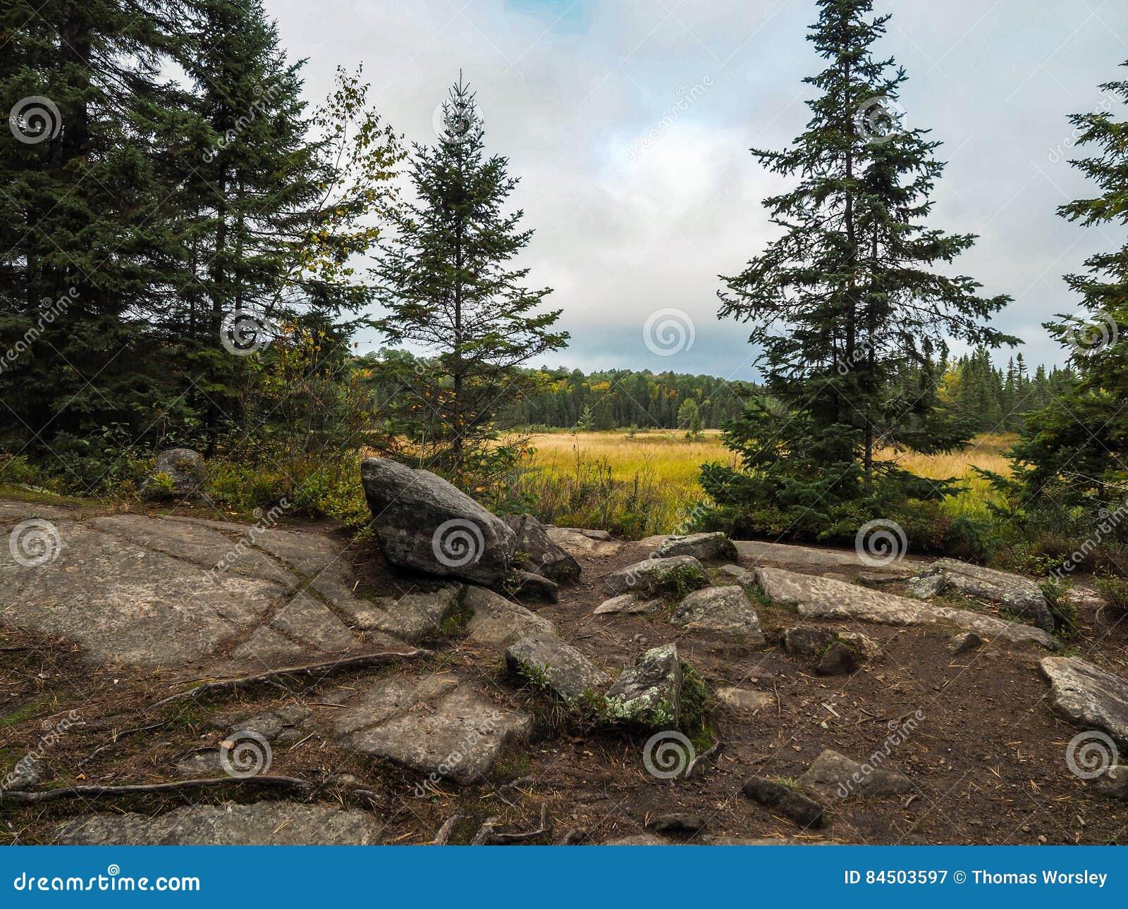 Rocky Marsh Algonquin Provincial Park