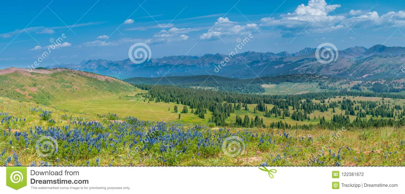 Rocky Mountains Summer Wildflowers
