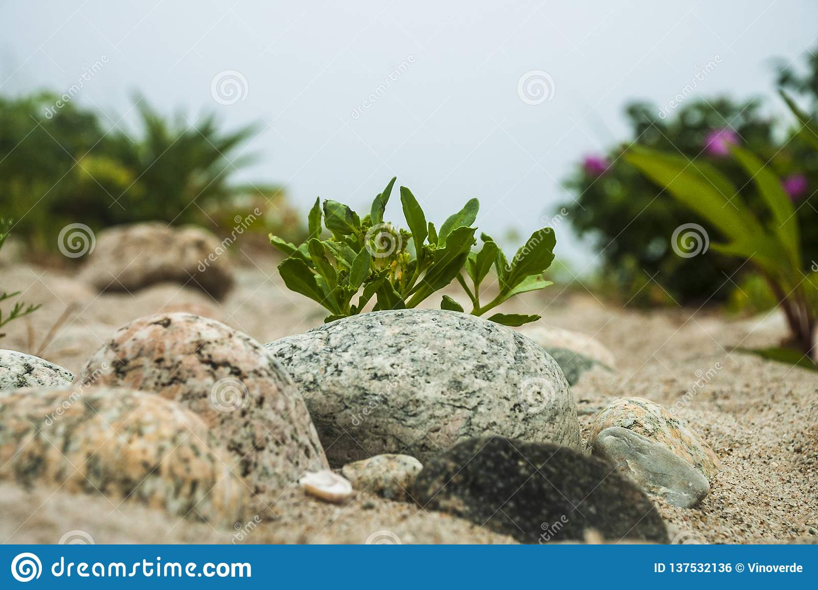 Rocky New England-strandsleep