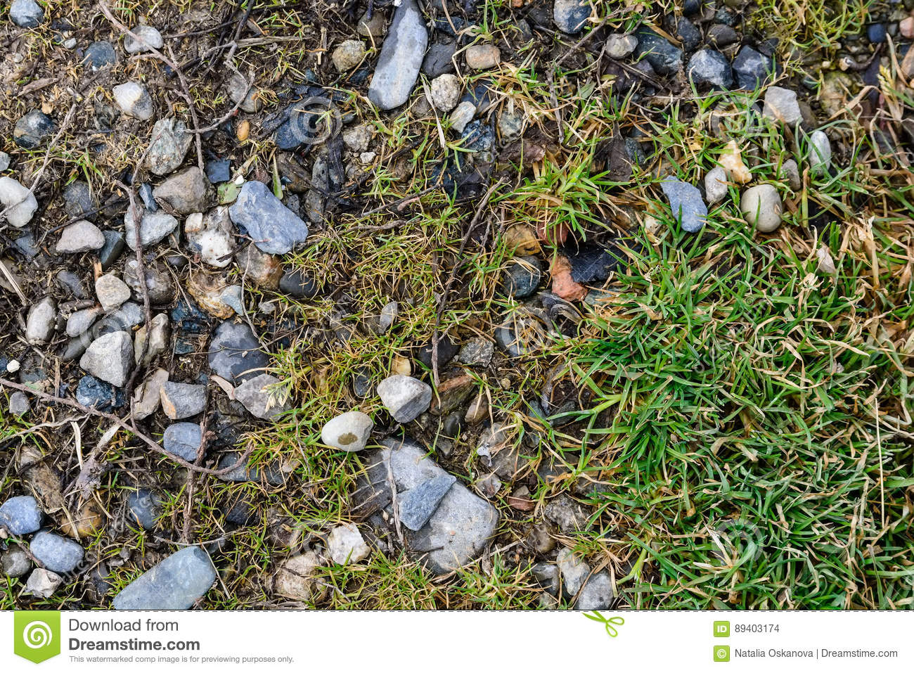 Rocky stones and grass on ground