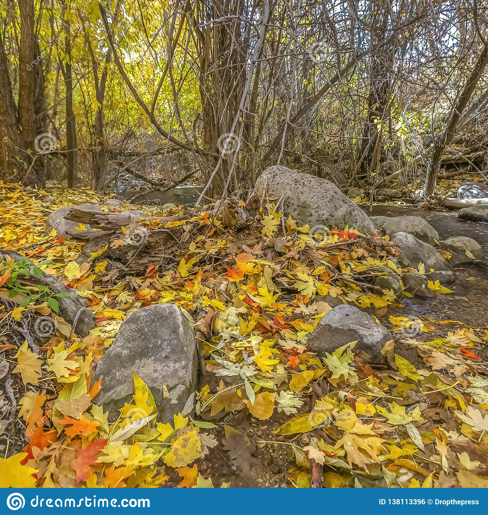 Rocky stream and autumn leaves in Salt Lake City