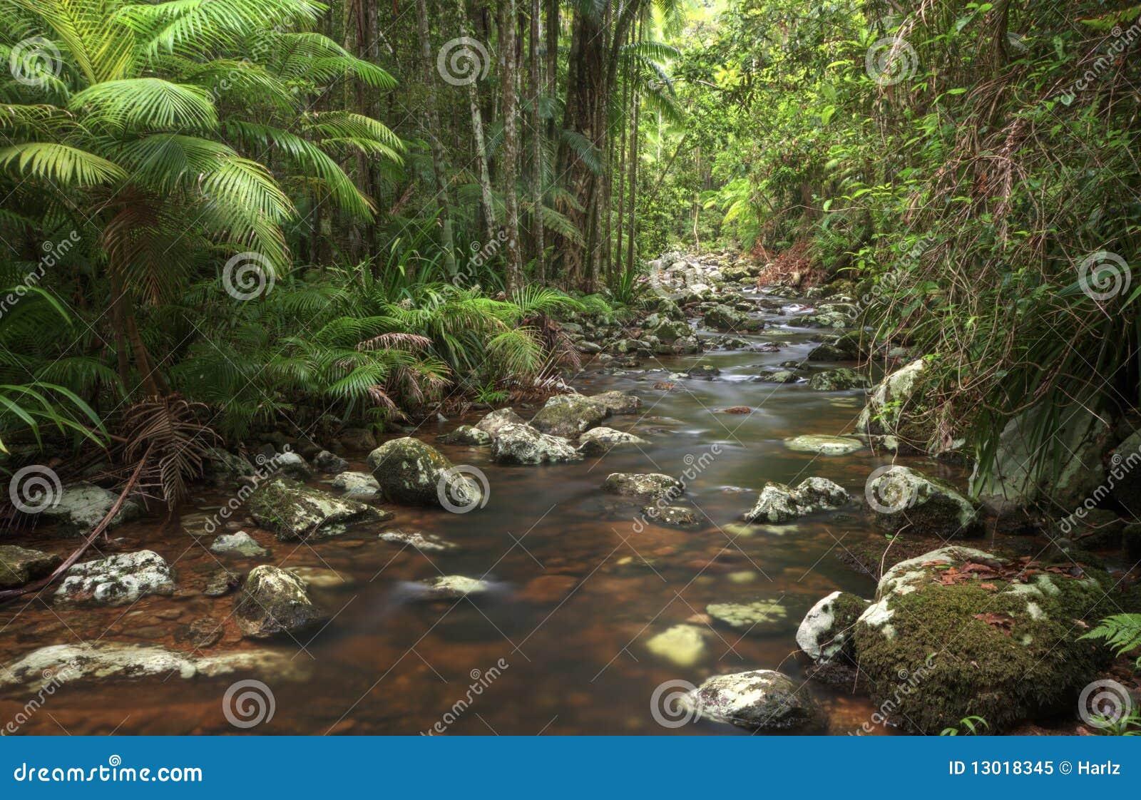 Rocky stream through rainforest and palm trees