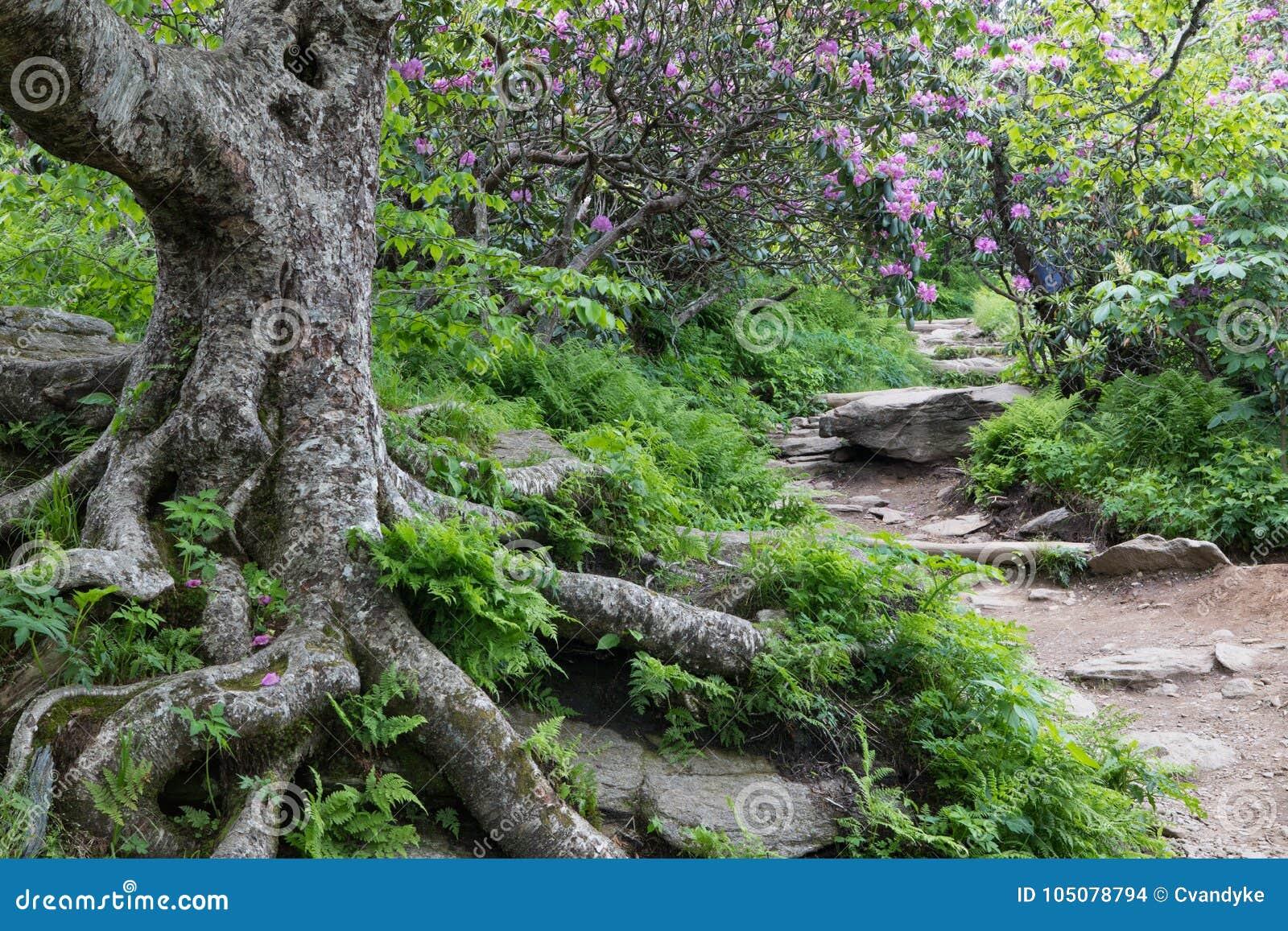 Rocky Trail aan Steile Tuinen Asheville Noord-Carolina