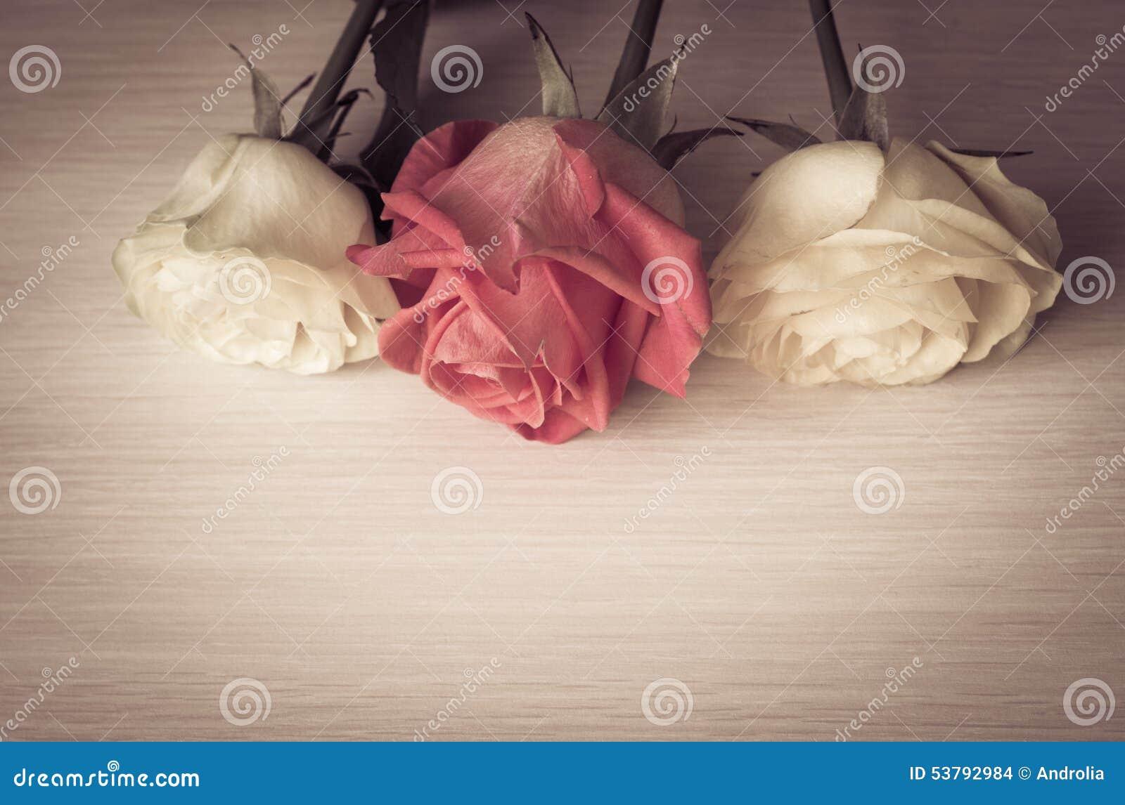 Rocznik róż zamknięty up