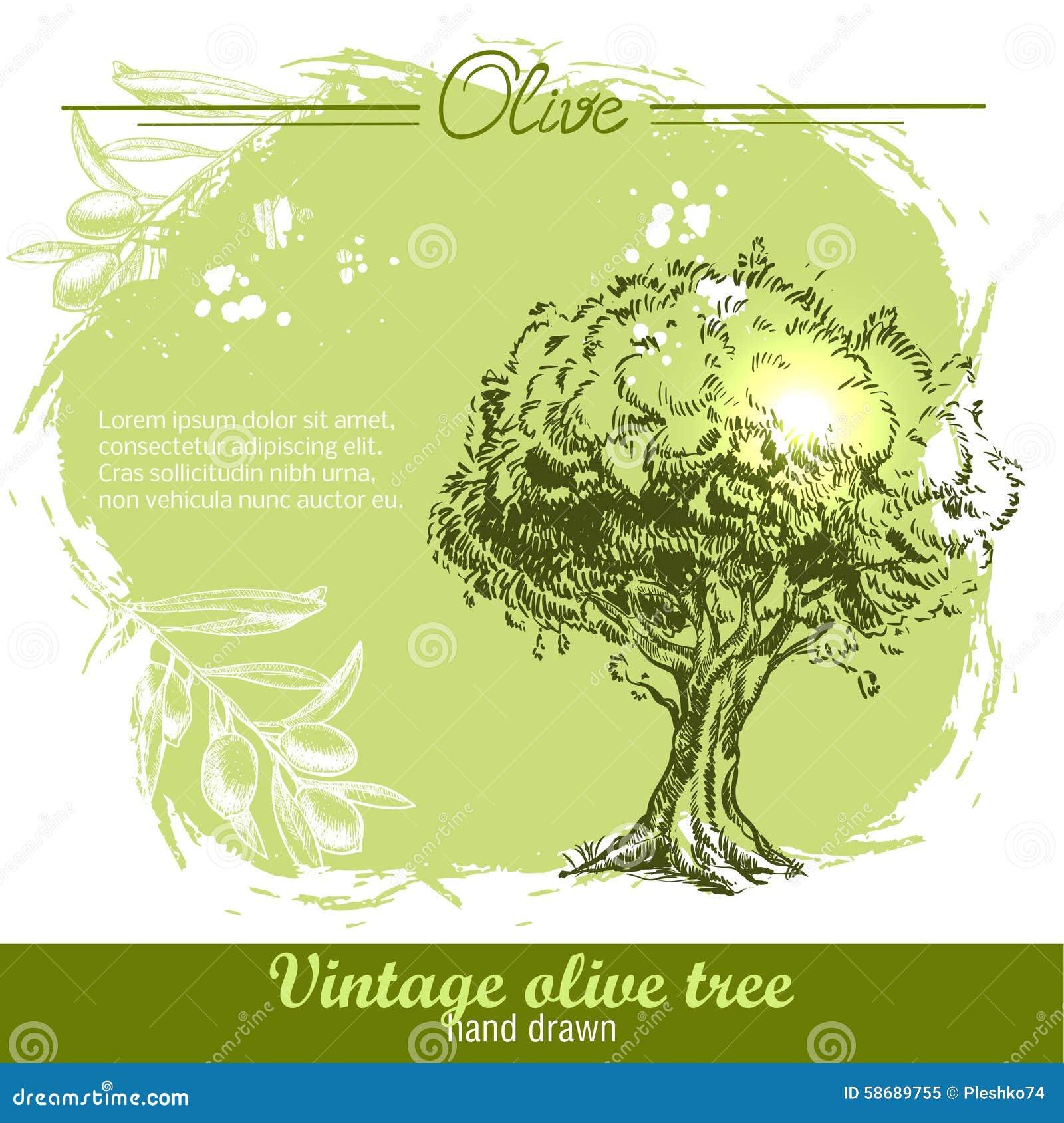 Rocznik ręka rysująca gałązka oliwna i drzewo oliwne