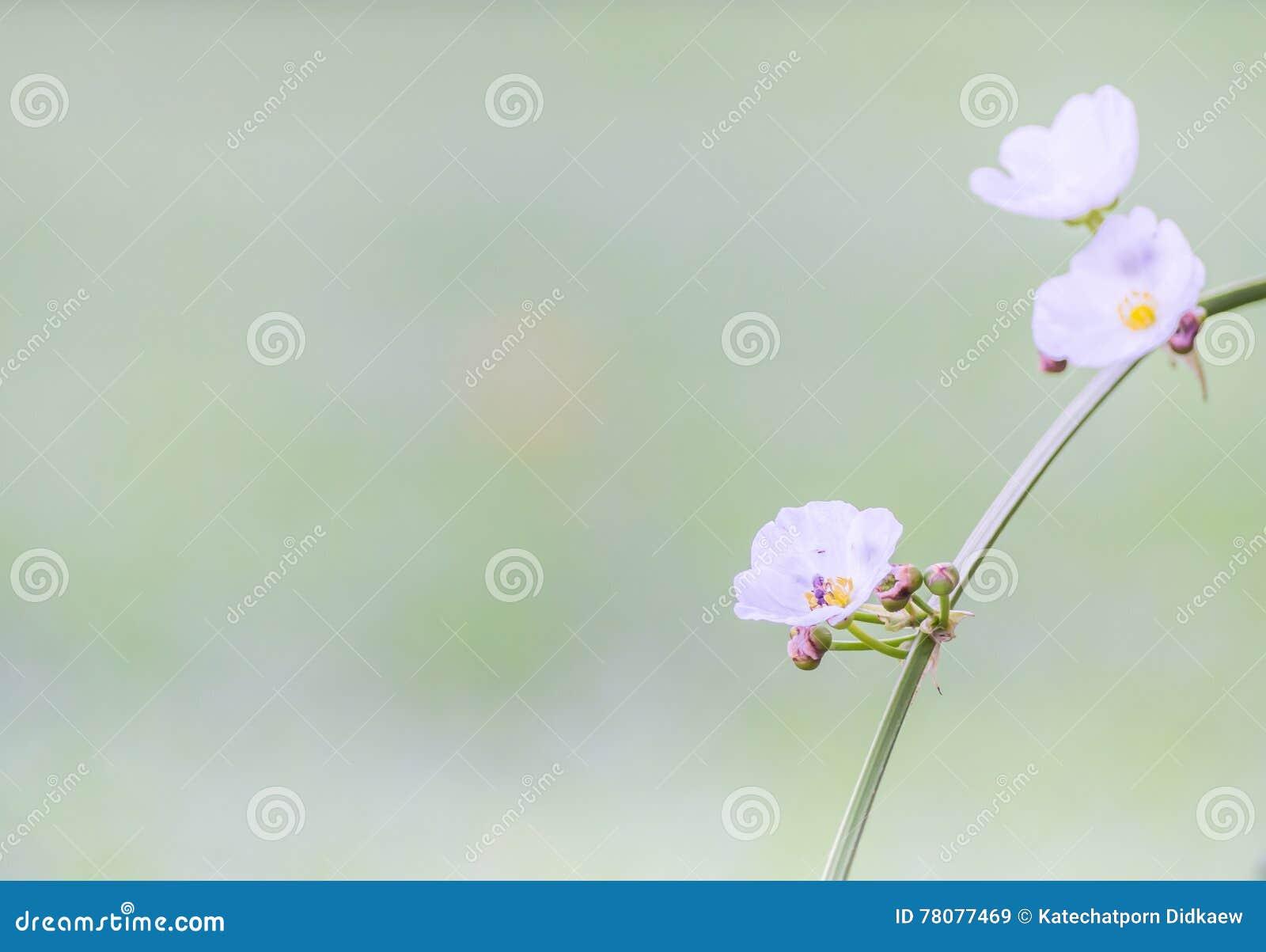Rocznika brzmienie kwiaty i natury rozmyty tło