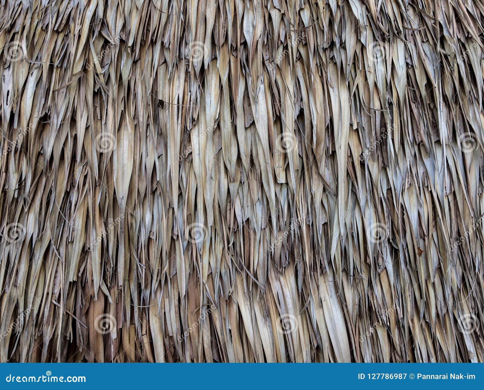 Rocznika dach robić od suchego palmowego liścia
