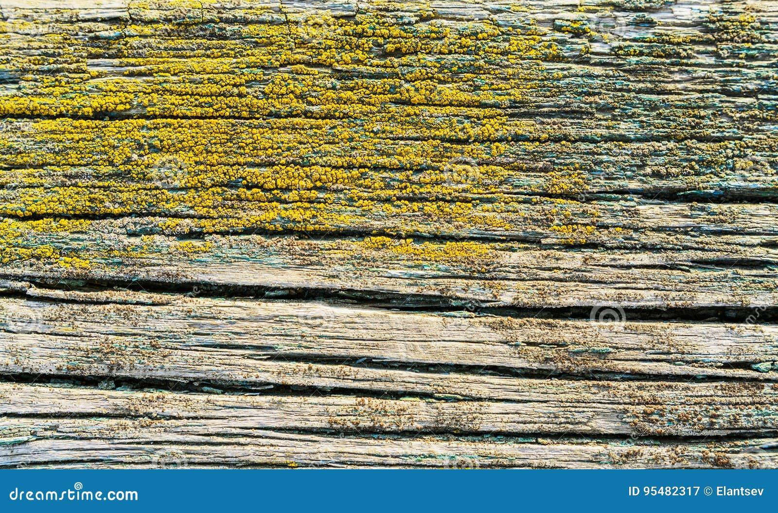 Rocznika tła drewniana tekstura z kępkami i gwóźdź dziurami