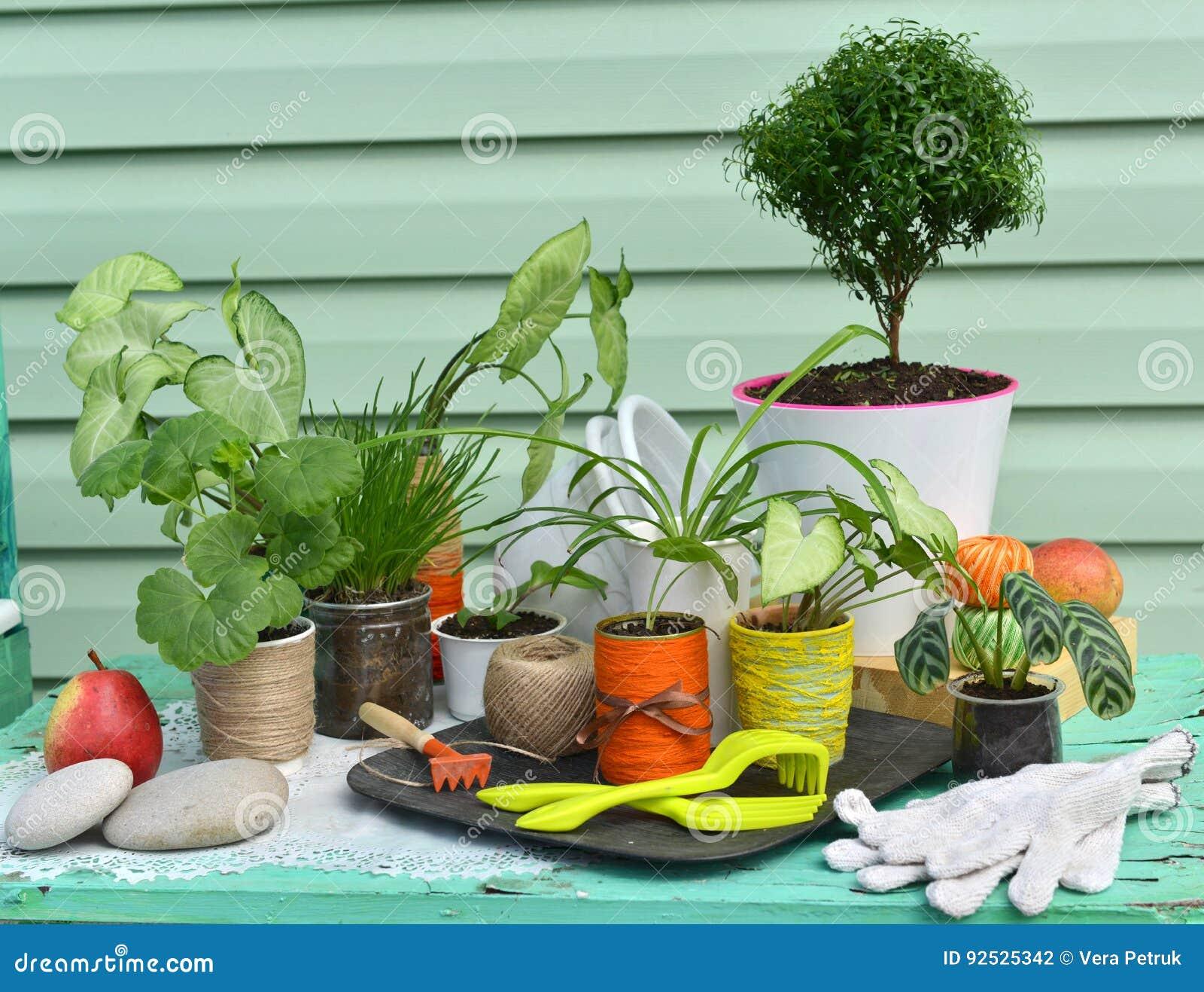 Rocznika wciąż życie z mirtowym drzewem, syngonium i innymi houseplants przeciw zielonemu nowożytnemu tłu,