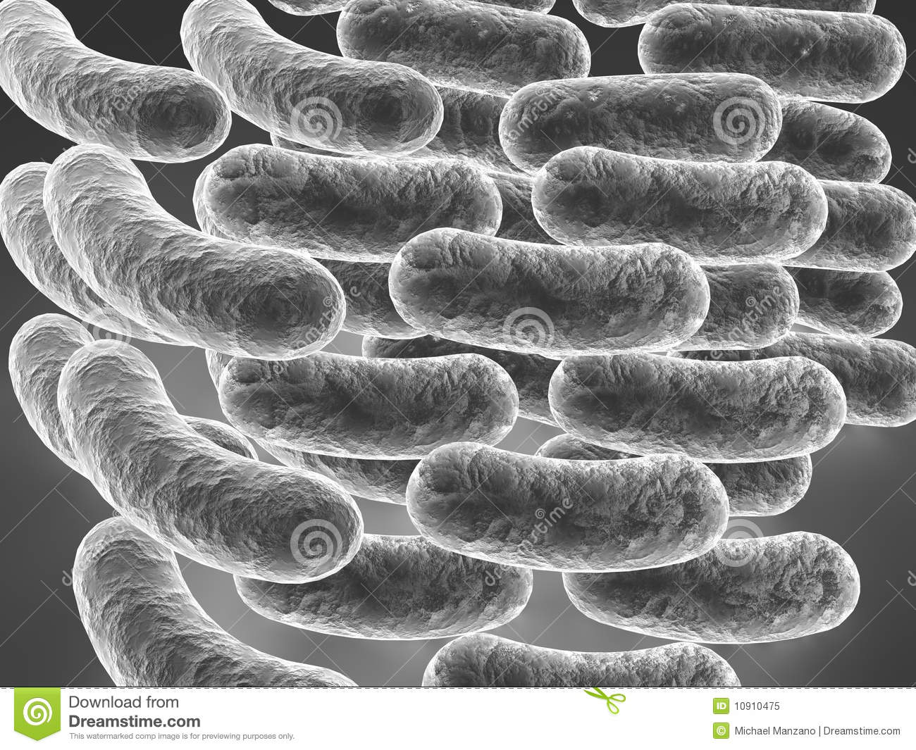 Colon Diagram Anantomy Of Digestiive System Physiology Ex le Best Detail Ideas Right Colic Cecum Free together with Oper C3 B3 lac likewise 04dnareplication as well 111421 All About Prokaryotes And Eukaryotes also 2189544. on e coli diagram labeled