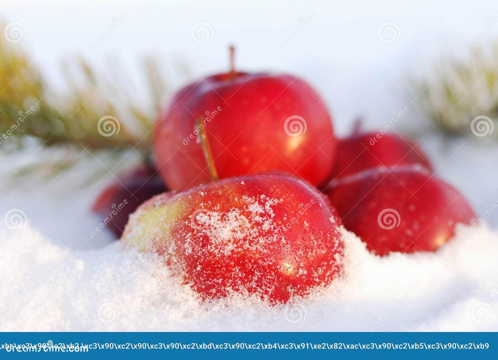Rode appelen op sneeuw