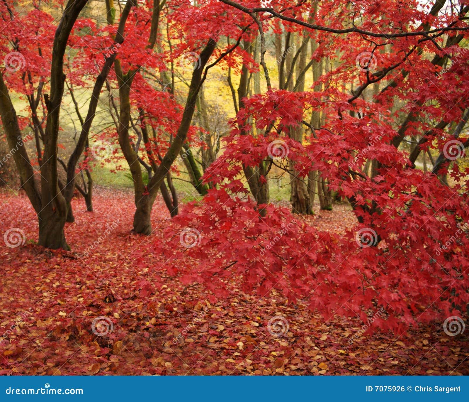 Rode bladeren in bos