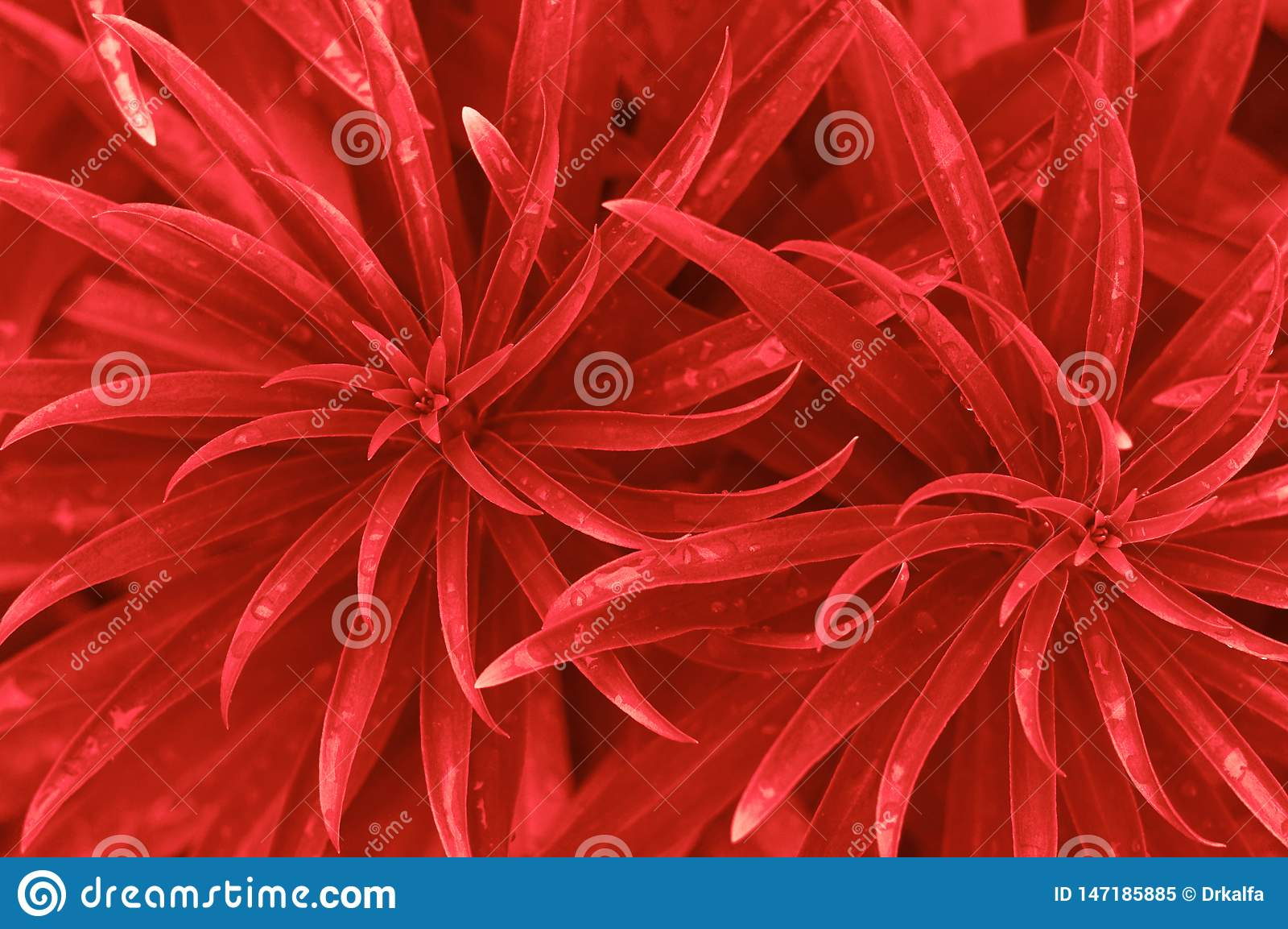 Rode bladerenachtergrond