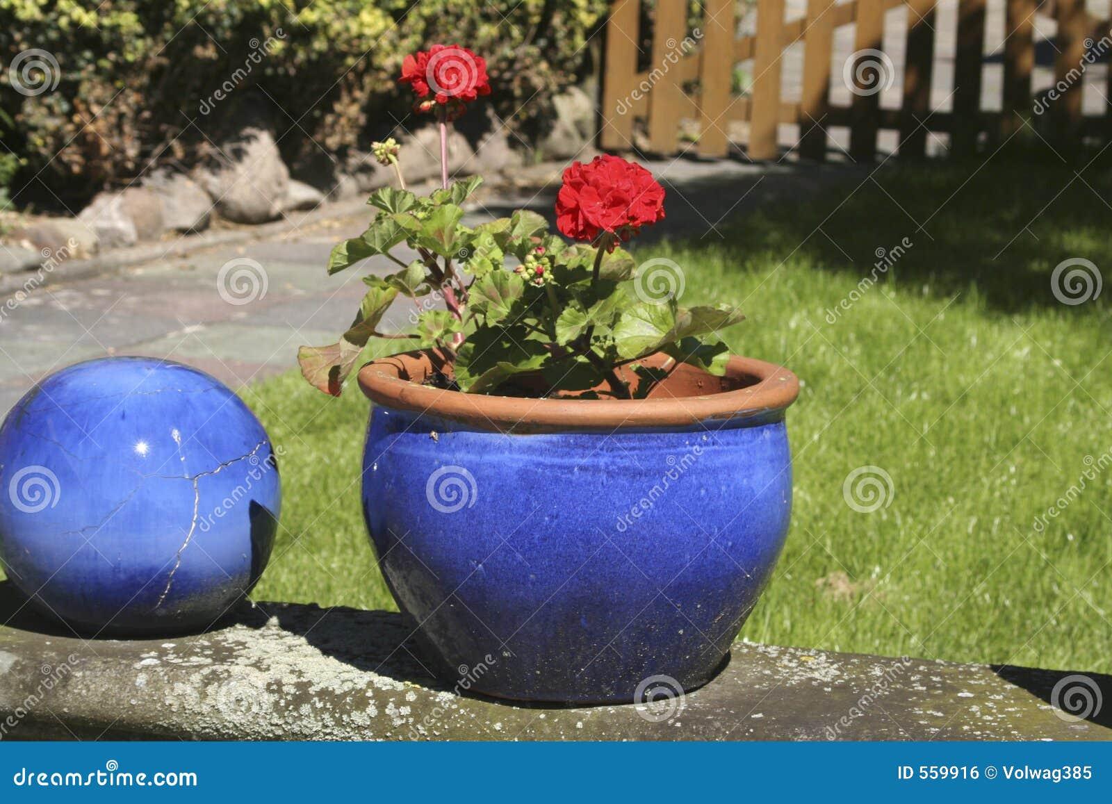 Rode Bloem Blauwe Pot Stock Foto Afbeelding Bestaande Uit Summer