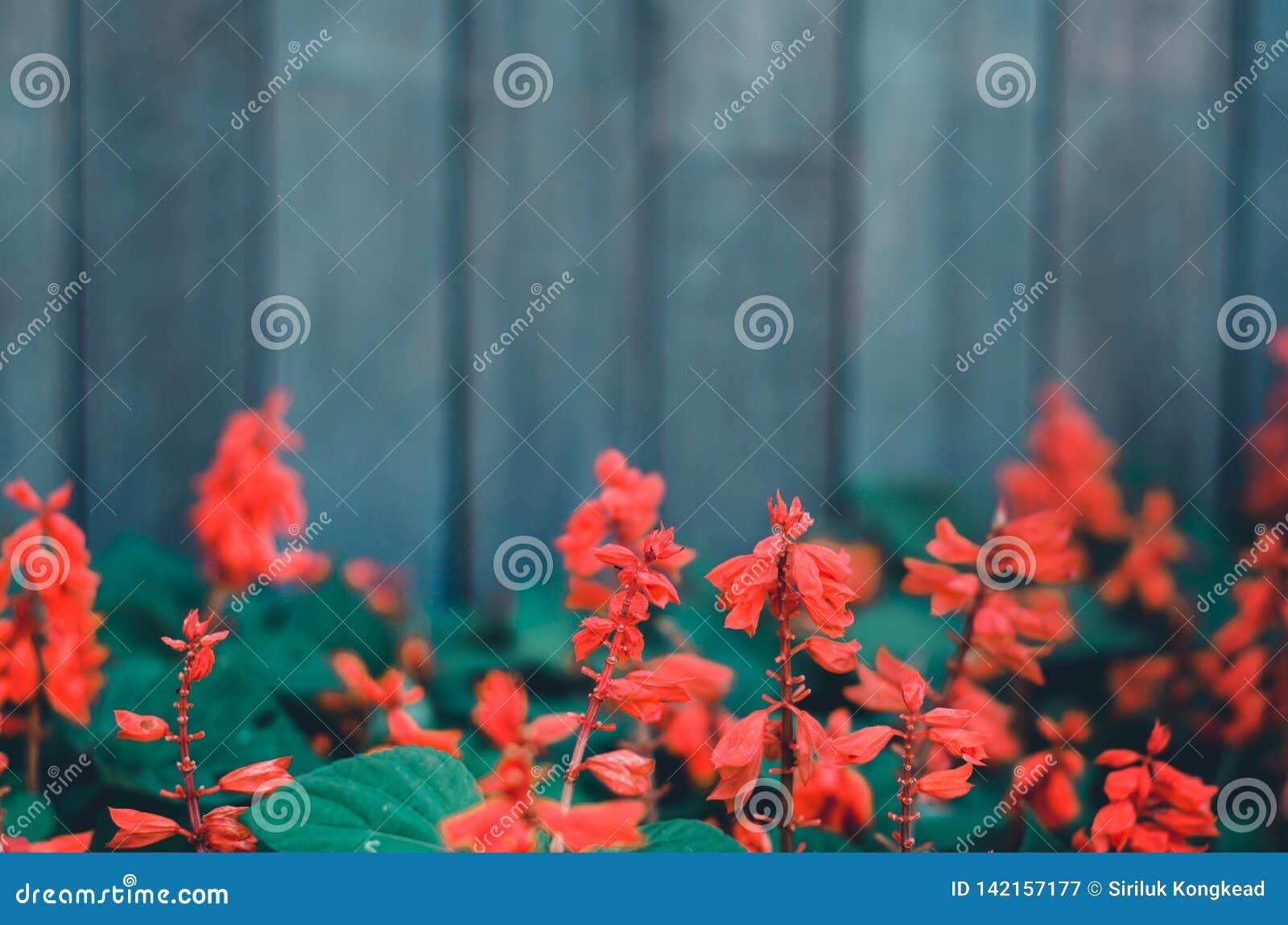 Rode bloemen in de tuin