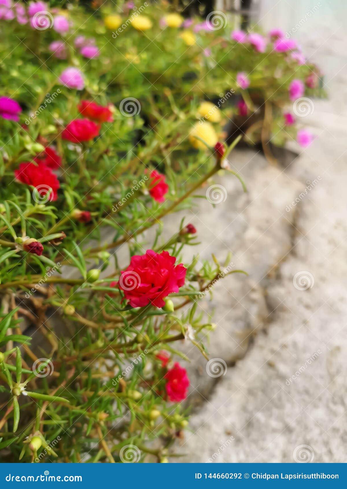 Rode bloemen in installatiepotten op cementvloeren