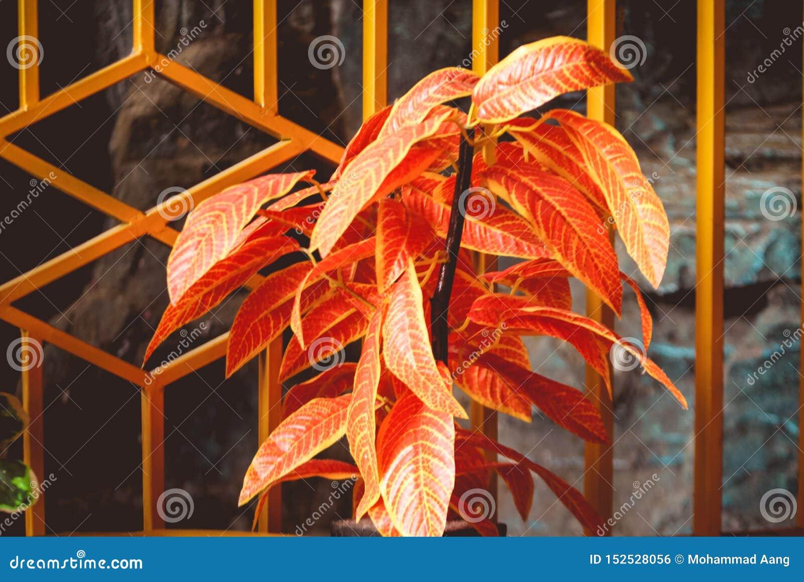 Rode bloeminstallaties in de huistuin