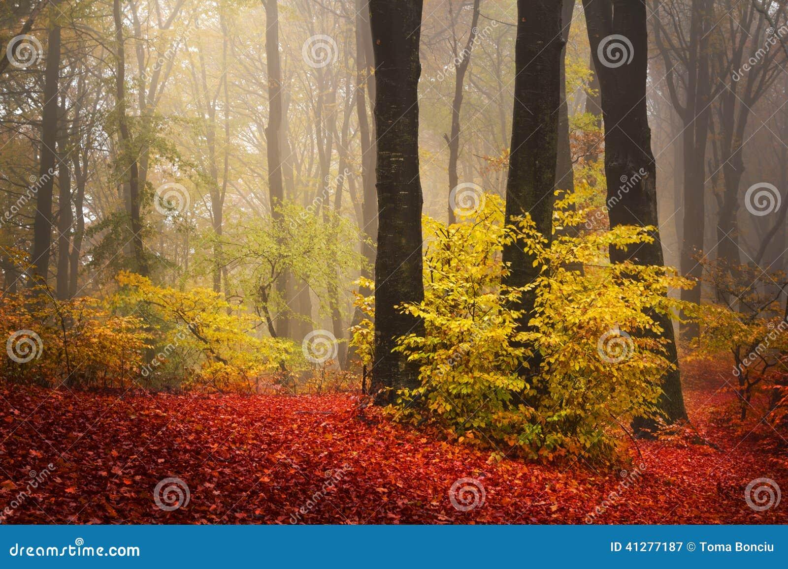 Rode bomen in het bos