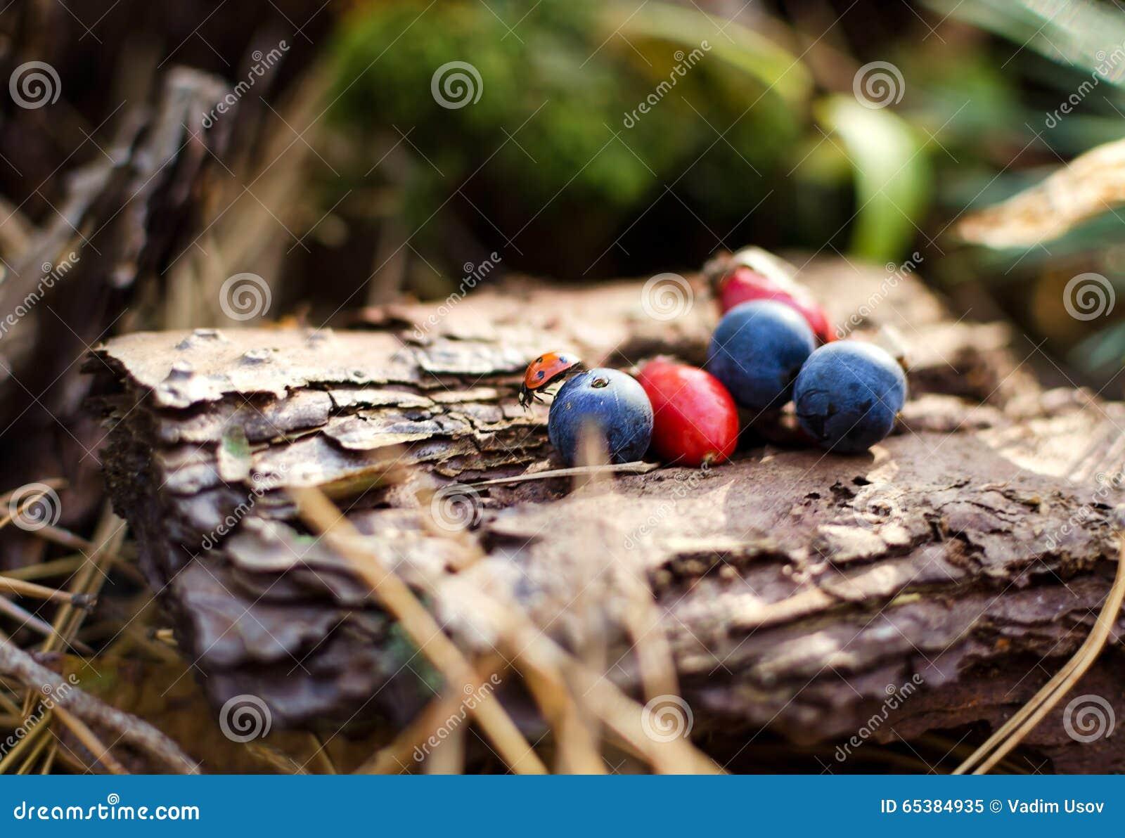 Rode en blauwe bessen op een oude stomp