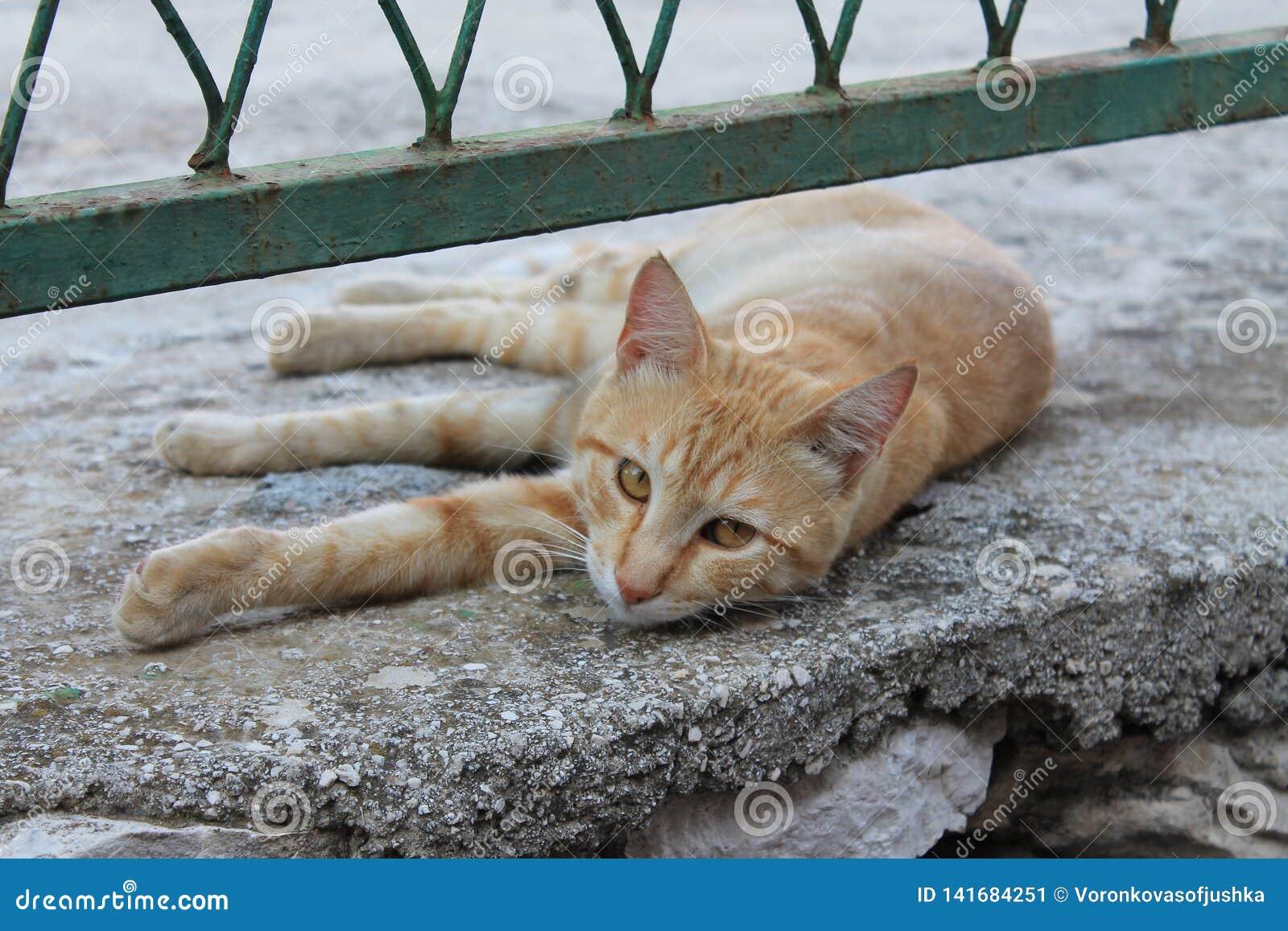 Rode kat onder de omheining