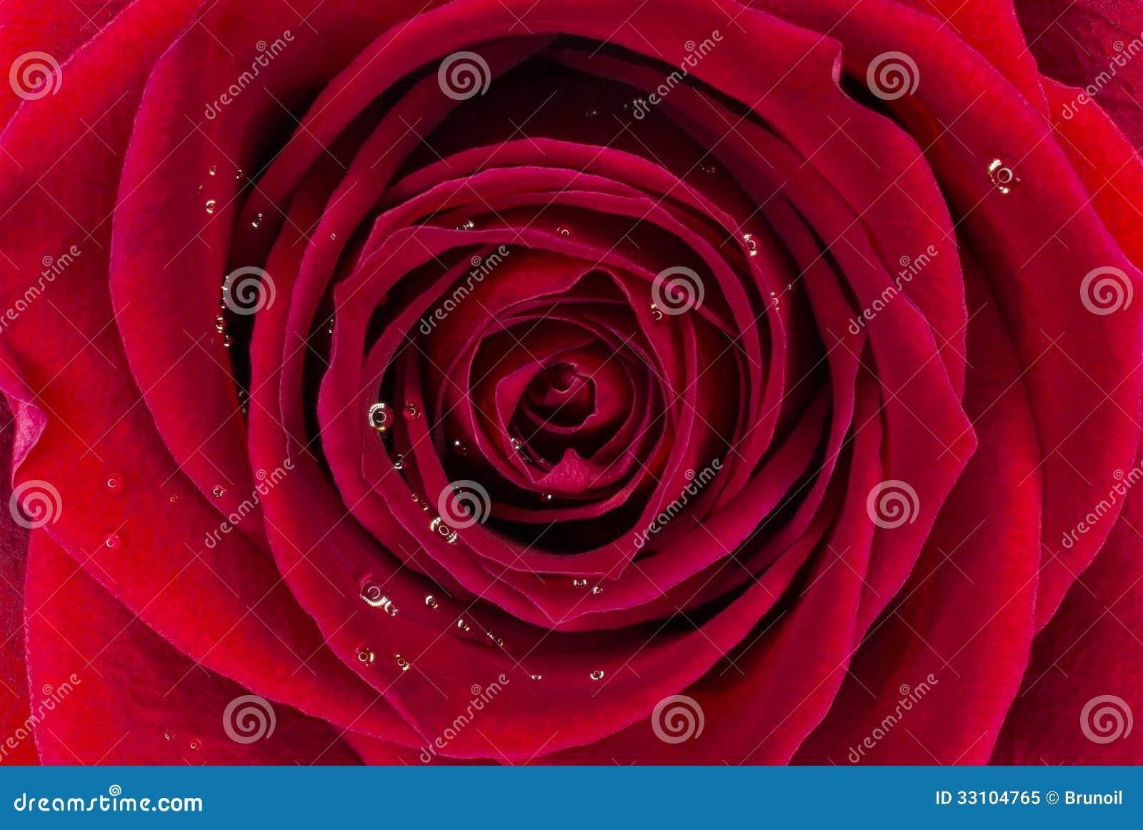 Rode Rose Background