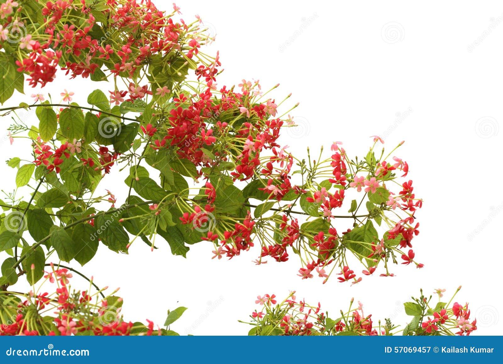 Rode roze bloem