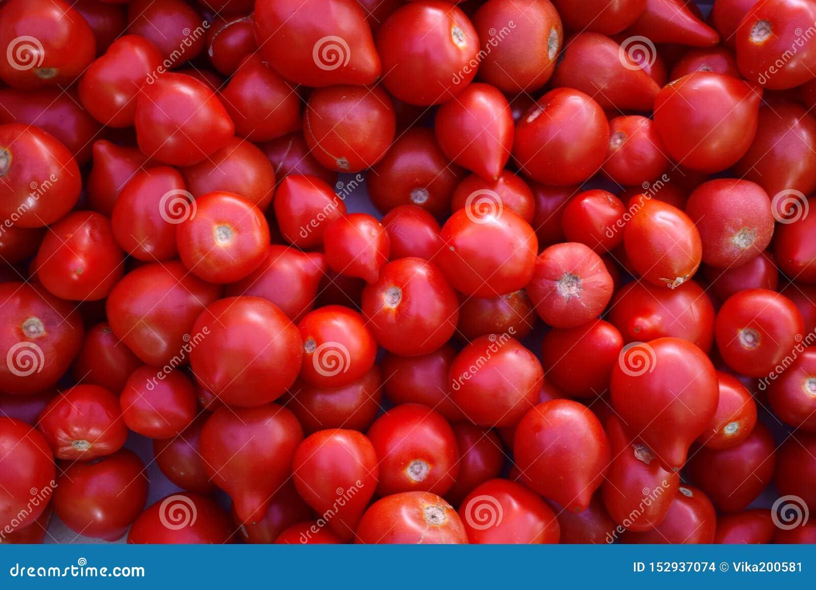 Rode sappige tomaten in markt Vele rode verse Tomaten