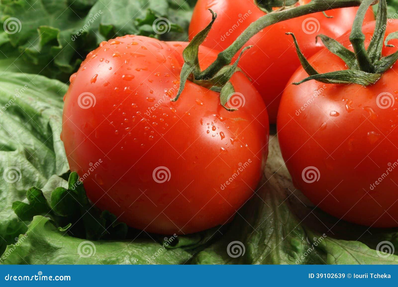 Rode tomaten en sla