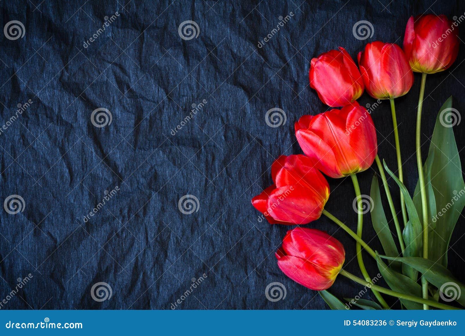 Rode tulpen op een zwarte achtergrond