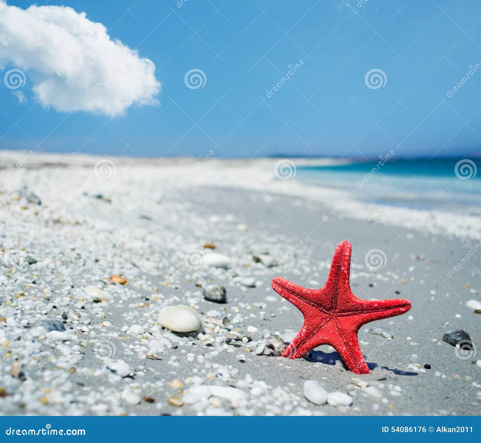 Rode zeester door de kust