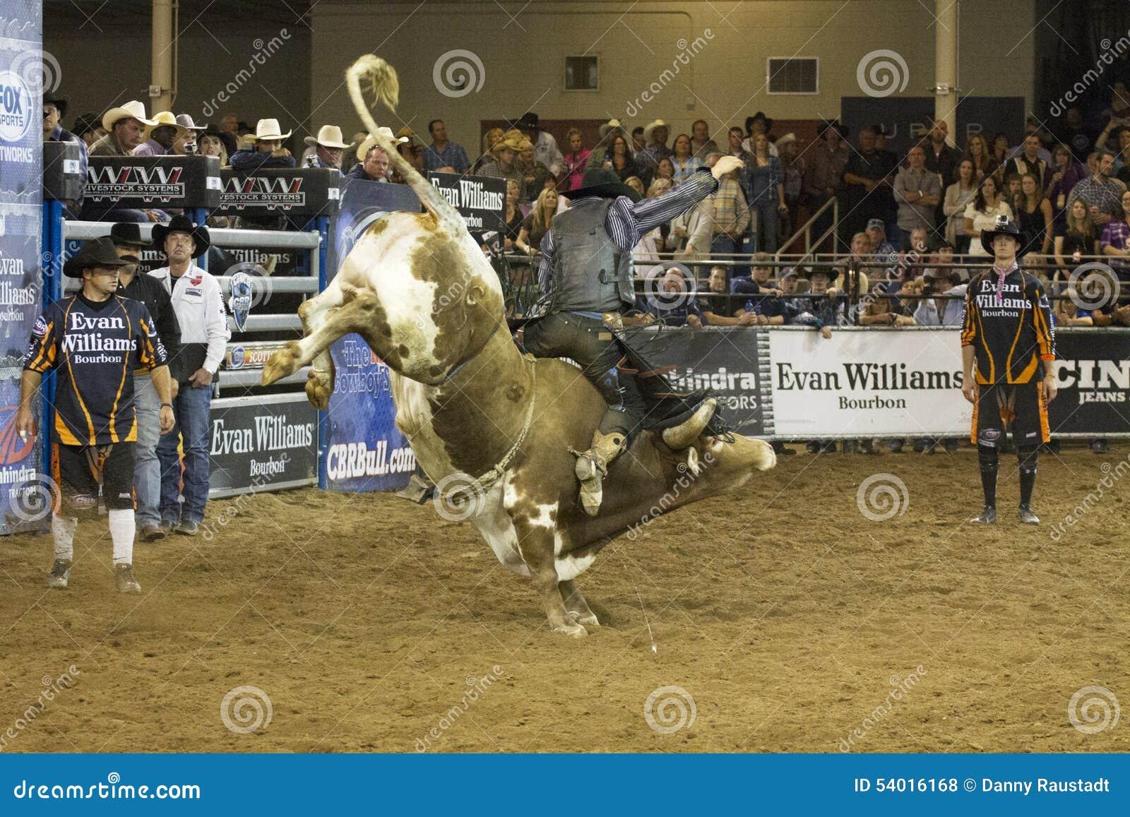 Rodeo byka jeźdza kowboje