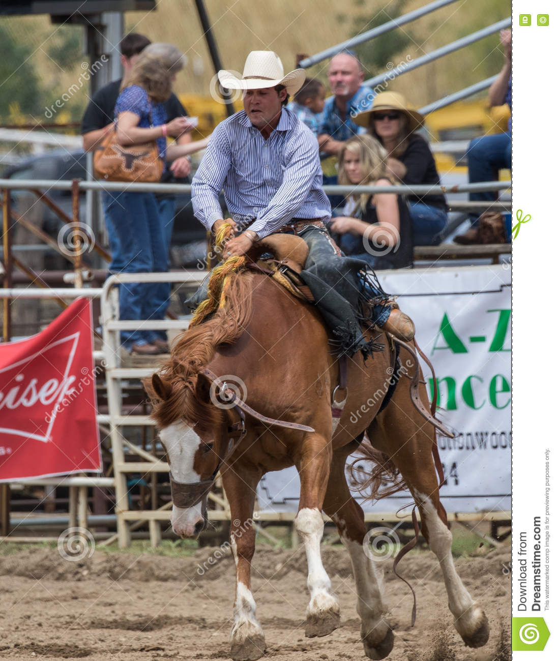 Rodeo Editorial Photography Image Of Bronc Country 73750447