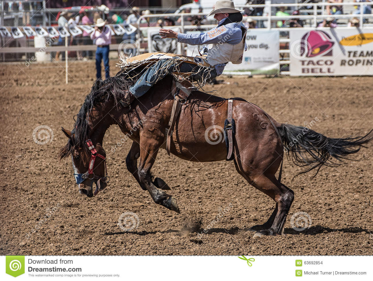 Rodeo Cowboy On A Rough Ride Editorial Stock Image Image